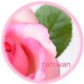 薔薇、バラ、ばら