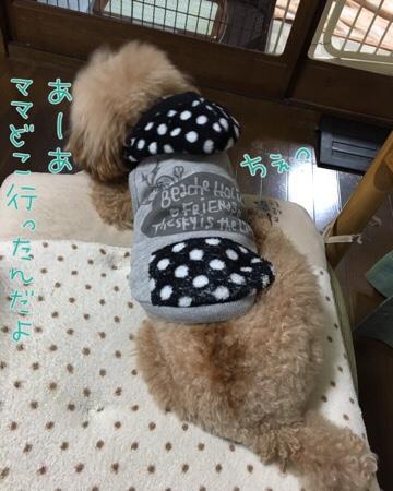 fc2blog_20160325222320f4c.jpg