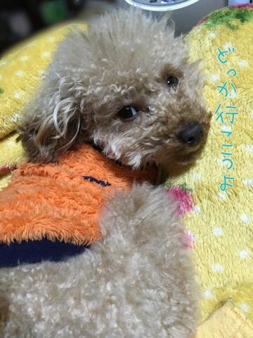 fc2blog_20160327211448a59.jpg