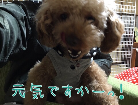fc2blog_2016032822350369f.jpg