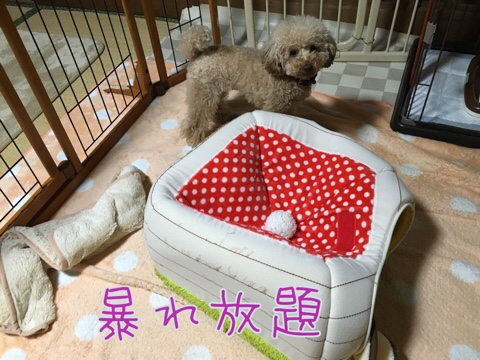 fc2blog_20160329212257924.jpg