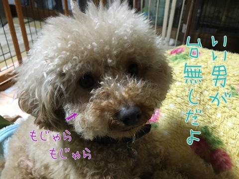 fc2blog_2016033023182818c.jpg
