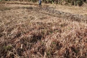 160225開墾中の畑
