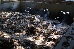 160302第2堆肥の湯気1