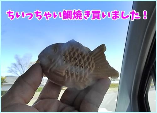 小さい鯛焼き