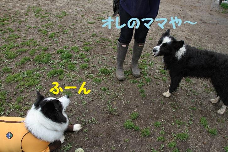 IMG_7032.jpg