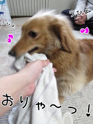 kinako4264.jpg