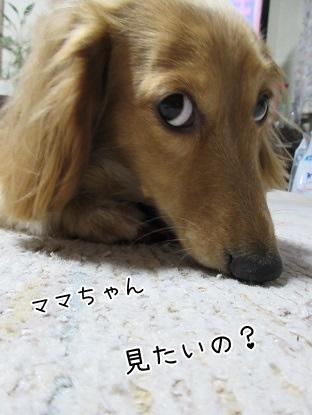 kinako4297.jpg