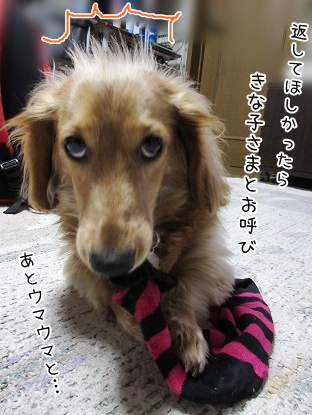 kinako4303.jpg