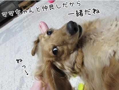 kinako4312.jpg