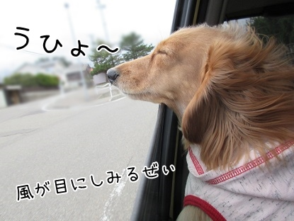 kinako4431.jpg
