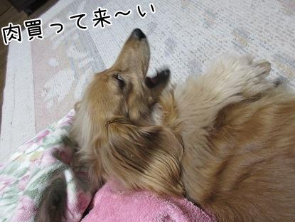 kinako4433.jpg