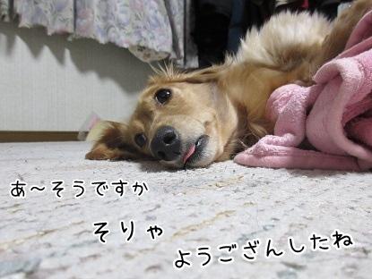kinako4434.jpg