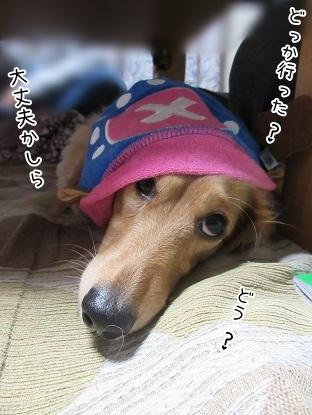 kinako4469.jpg