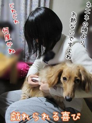 kinako4477.jpg