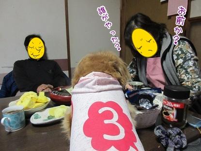 kinako4491.jpg