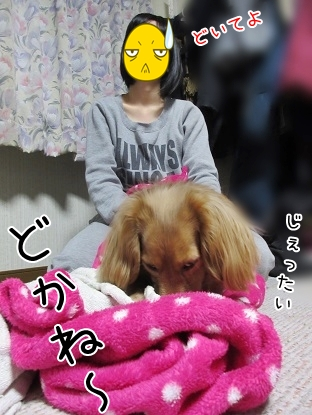 kinako4498.jpg