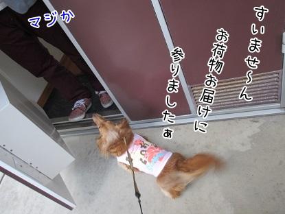 kinako4513.jpg