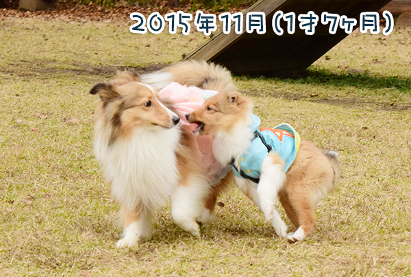 DSC_0123_20160404214352c0e.jpg