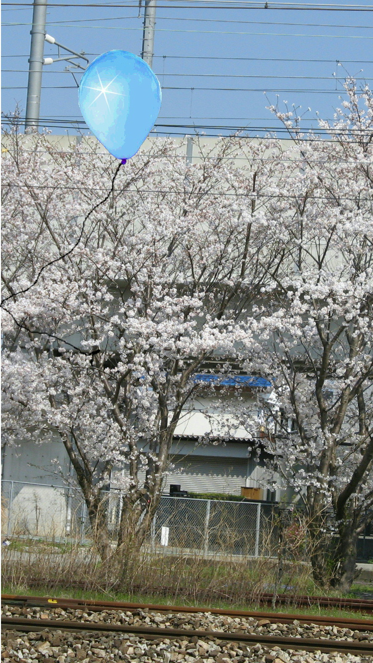 pea-sakura002.jpg