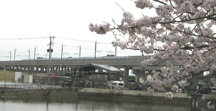 sakura-shin5.jpg