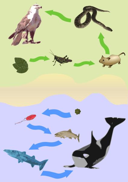 【食物連鎖】何で動物は他の生物を食べるの?