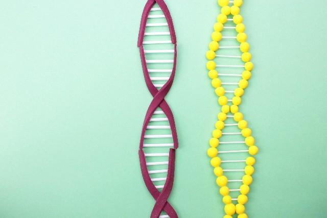 行動遺伝学者に聞く!人の行動、心の働きは親の「遺伝」によりどれくらい影響受けるのか?「性格・知能・芸術・収入等」 → 「約50%」