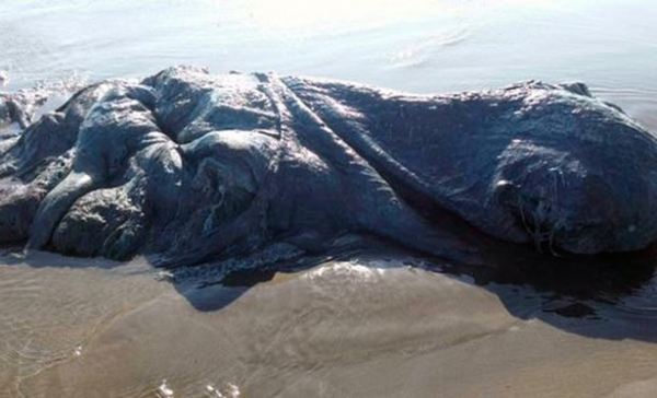 PAY-Mysterious-sea-creature.jpg