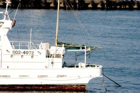 【富山】漁業関係者「ブリがこれほどまでに不漁とは…記憶にない」初競りたったの37匹