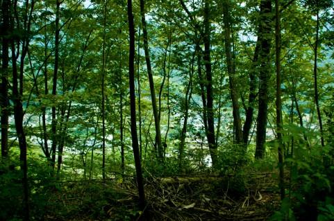日本政府「今後、森林などは放射性物質の除染はしないことにします」