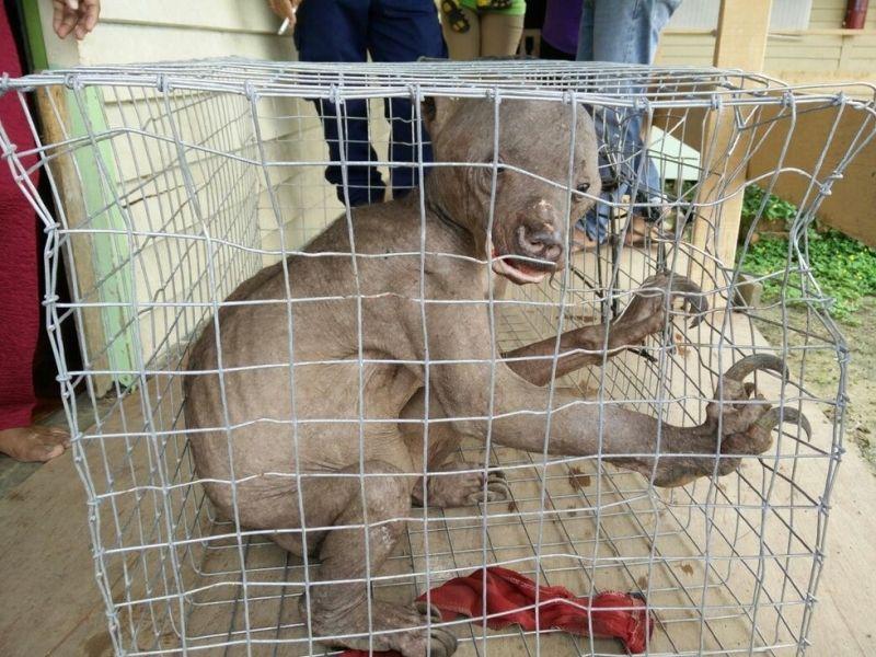 【水鬼】中国にチュパカブラが出現…ニワトリなど200羽が血を吸われる