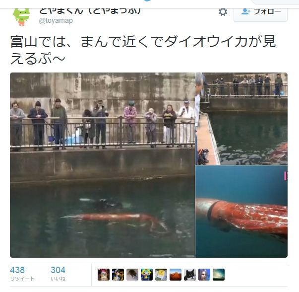 富山県の港に迷い込んだ「ダイオウイカ」、ダイバーの誘導で沖へ戻る