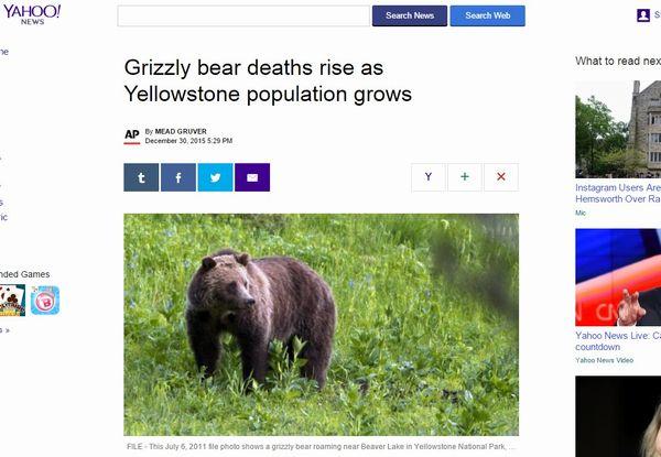 イエローストーン国立公園の「グリズリー」がいなくなっている…減少数は過去最大に