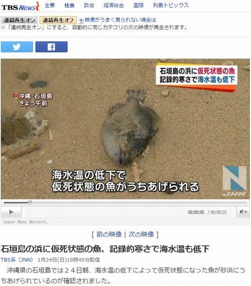 【沖縄】石垣島の浜辺に寒波による海水温低下の影響で、魚が打ち上げられる!