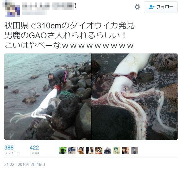 秋田県の海岸に3メートル近い「ダイオウイカ」が打ち上がる…「県内での発見は記録にない」「地震の前兆の可能性は否定できないが…」