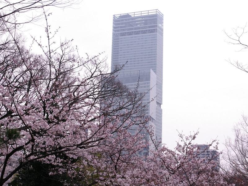 桜とハルカス
