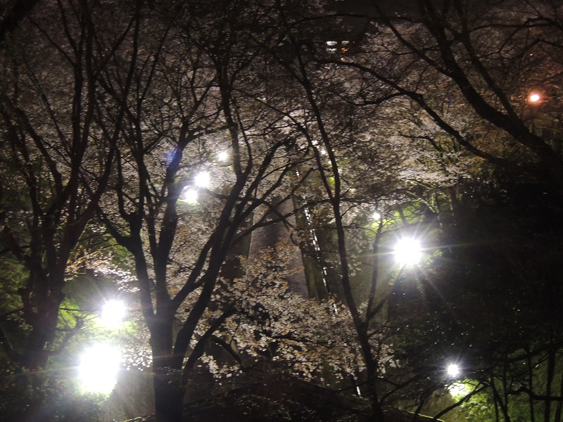 ライトアップ びわ湖疎水 その2
