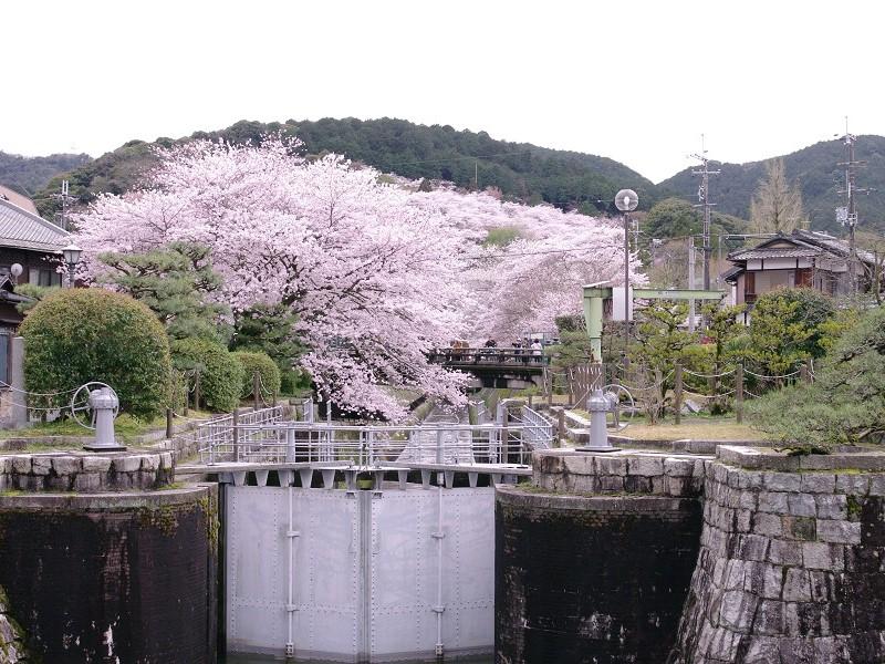 三井寺 疎水