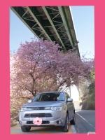 伊豆七滝 上条の桜 (河津桜) アウトランダーPHEV