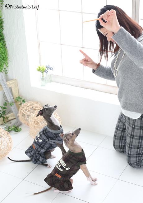 ペット写真 犬