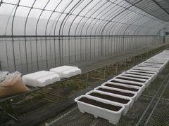 【写真】培土を入れた親苗プランターを育苗ハウスに並べた様子