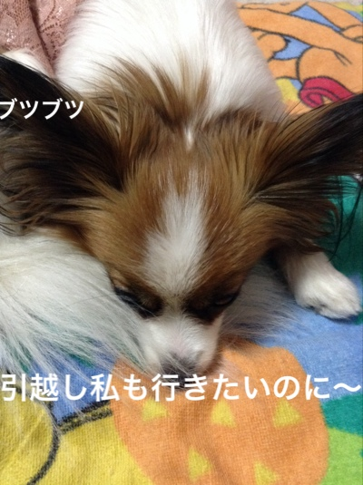 fc2blog_20160326173700288.jpg
