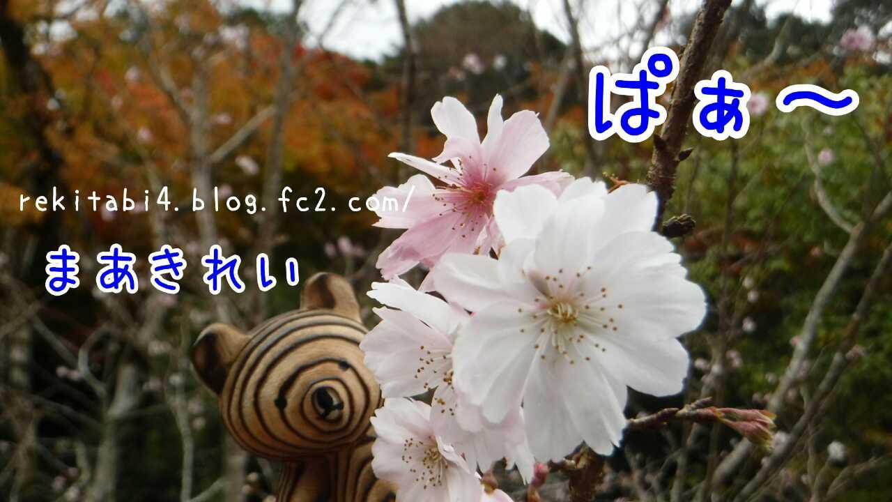20160313231826255.jpg