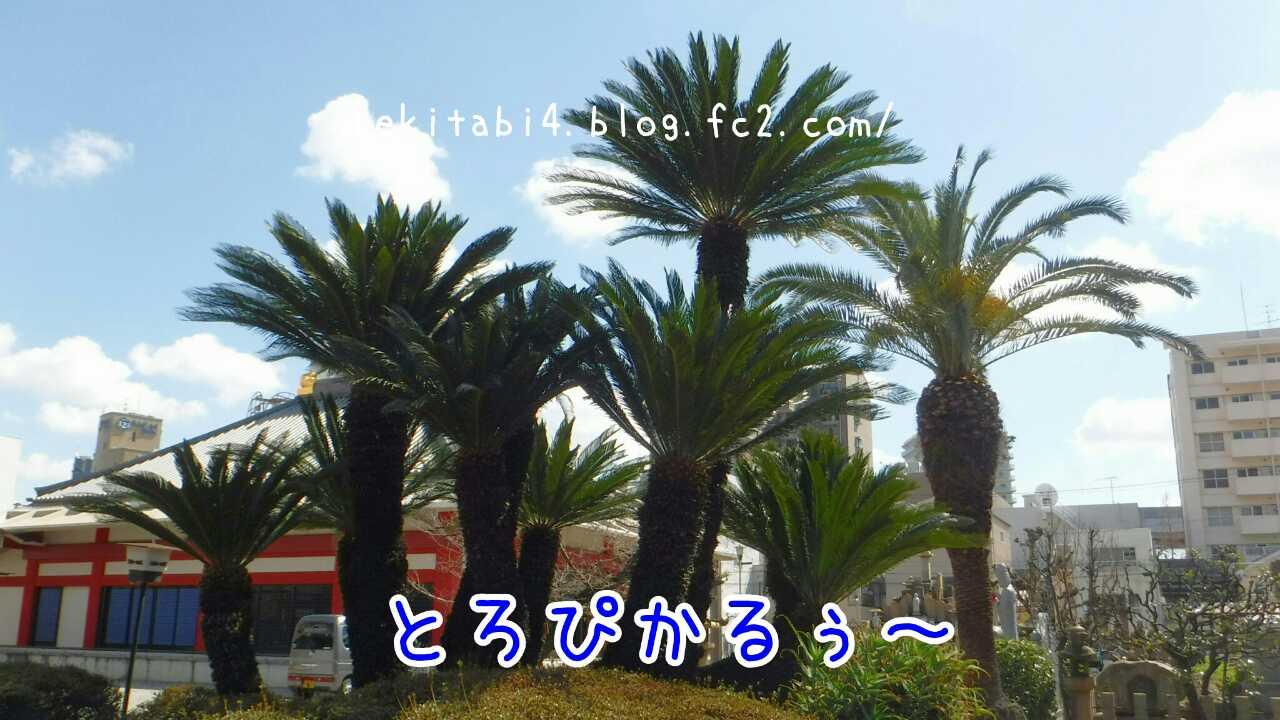 20160325011306120.jpg