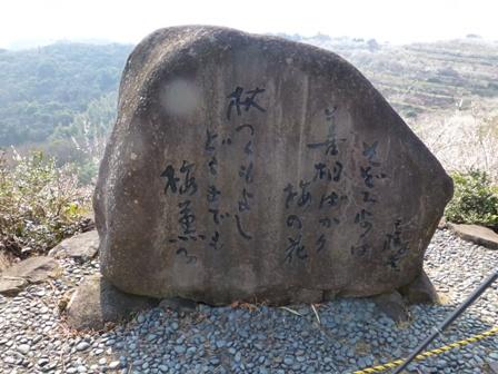 綾部山梅林30