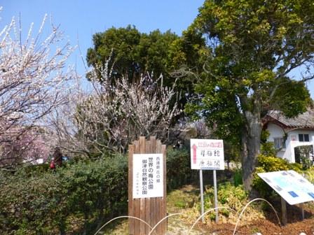 世界の梅公園6