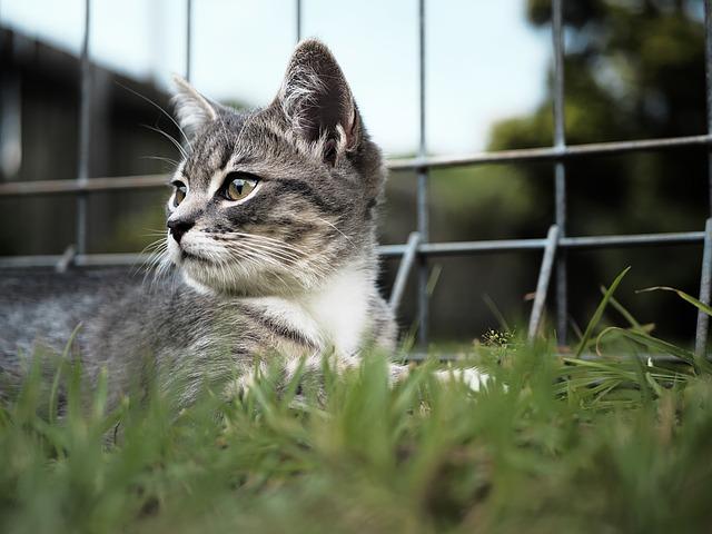 kitten-1179065_640.jpg