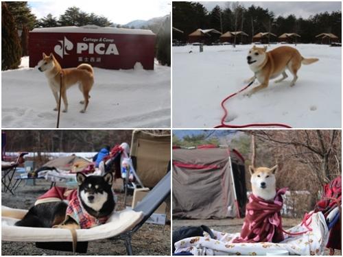 1月キャンプ