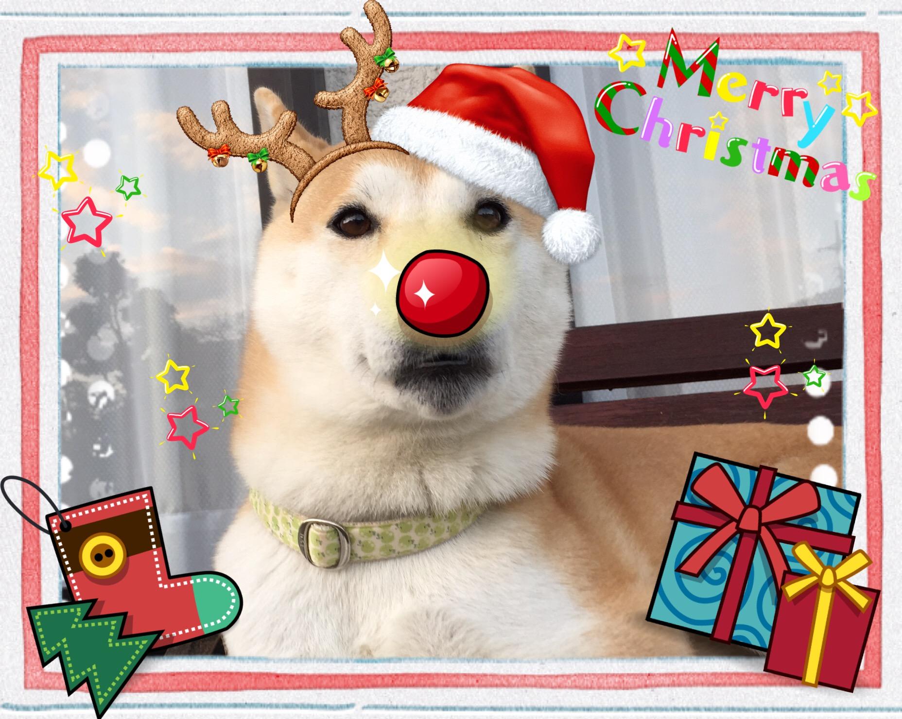 今日はクリスマス!