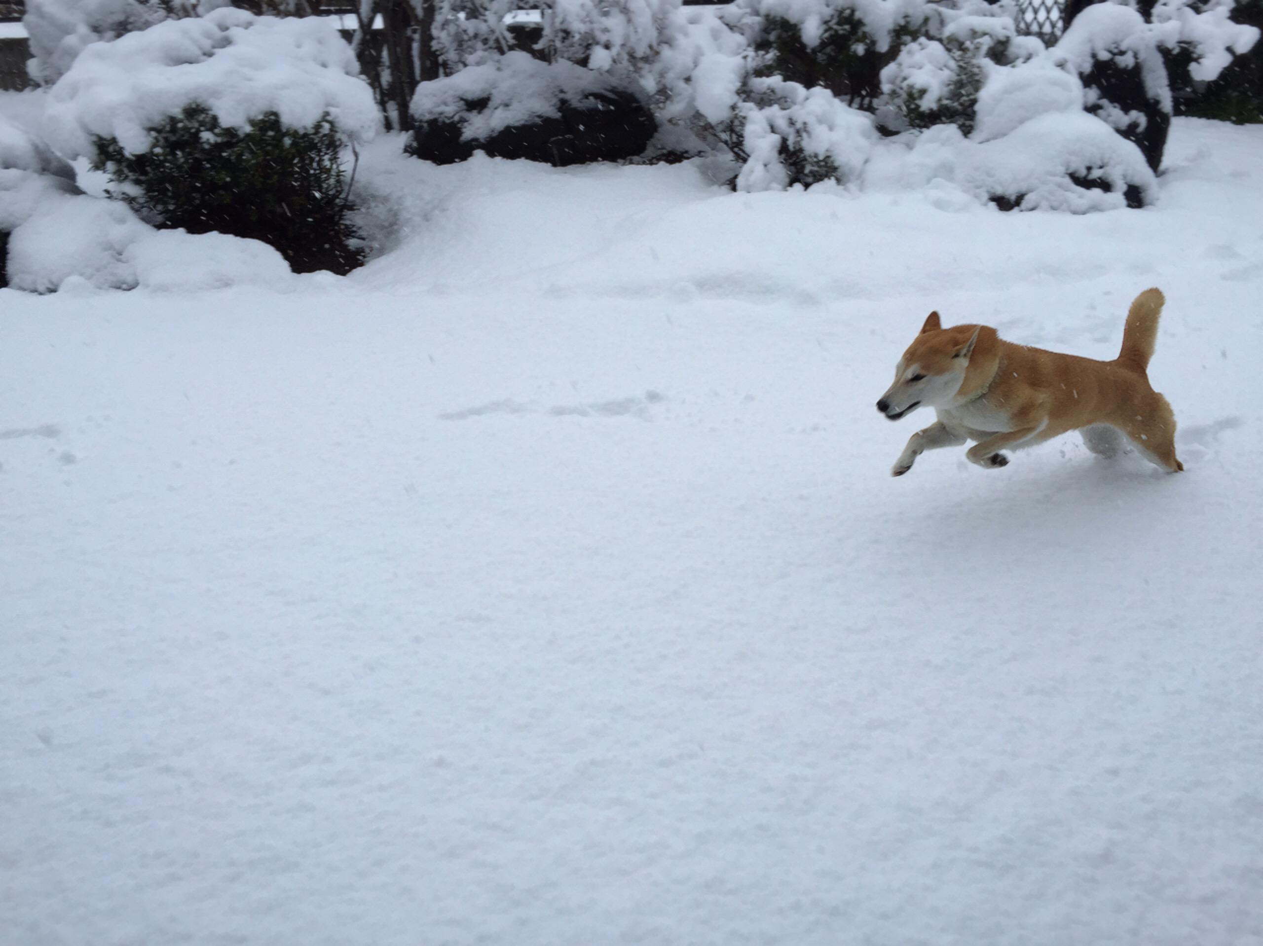 初雪に大興奮のさくら
